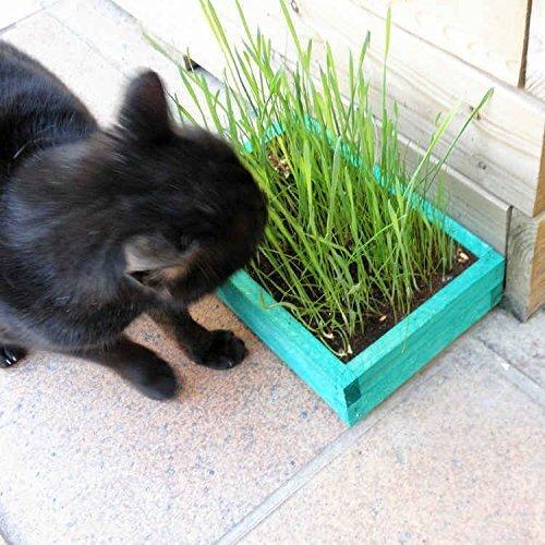 kit-de-hierba-para-gato-basic