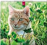 Katzen: Original Stürtz-Kalender 2019 - Mittelformat-Kalender 33 x 31 cm