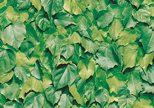 alkor DecoDesign F3800022 Selbstklebefolie, Folienmaß 45 x 200 cm, Dicke 0,10 mm, grün