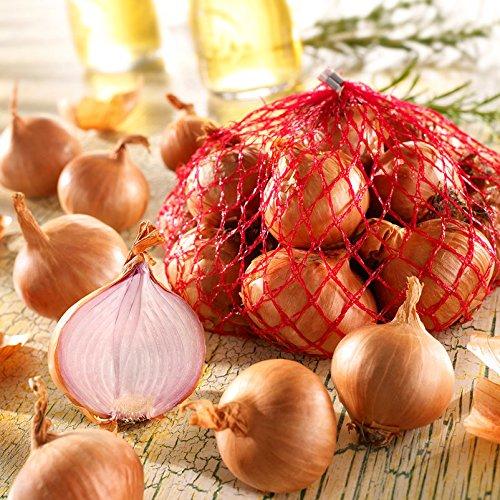 Kiepenkerl Rote Schalotten Sante - Zwiebelfleisch weiß/rosa - Geschmack mild - Größe 7/14 - Packung mit 500 g