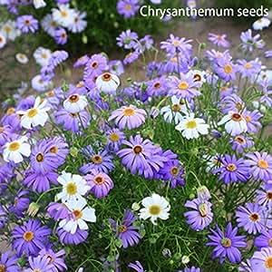 Ncient 1 pacchetto di semi sementi di fiori rari for Semi di fiori