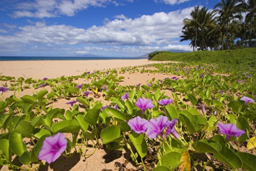 The Poster Corp Ron Dahlquist/Design Pics - Hawaii Maui Kihei Keawakapu Beach Green Leafy Vines with Pink Flowers On Shore. Photo Print (86,36 x 55,88 cm)