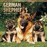 German Shepherds - Deutsche Schäferhunde 2018-18-Monatskalender mit freier DogDays-App: Original BrownTrout-Kalender [Mehrsprachig] [Kalender] (Wall-Kalender)
