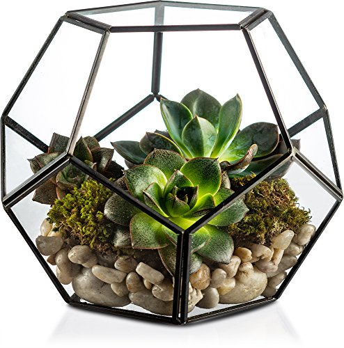 KooK Schwarz Moderne Geometrische Terrarium