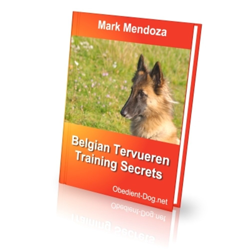 Belgian Tervuren Training Secrets