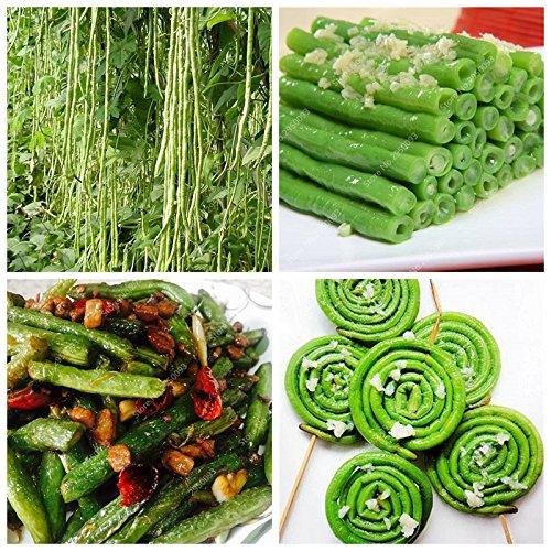 20pcs / sac importé à long haricots Graines Outdoor légumes bio savoureux Bonsai Jardin Plante en pot pour Flower Pot Planters