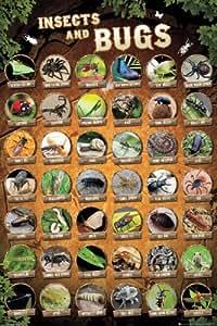 """Les insectes et acariens-Nature Poster Collage de plusieurs bugs et insectes) (Taille :  24 """"x 36"""" (Poster & Strip Lot)"""