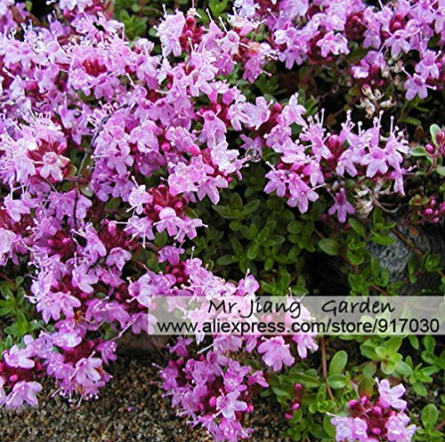 200 pezzi rose rampicanti semi, piante rampicanti, semi di fiore cinesi per il regalo giardino di impianto per la moglie