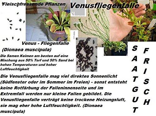 25x Venus Fliegenfalle Venusfliegenfalle Samen Saatgut Pflanze Saatgut Rarität Zimmerpflanze Neuheit #33