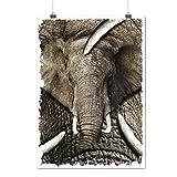 Éléphant Visage Sauvage Animal gris Ivoire Matte/Glacé Affiche A2 (60cm x 42cm) | Wellcoda