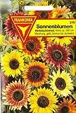 Sonnenblume, Helianthus annuus, ca. 20 Samen
