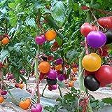 Go Garden 100Pcs Rainbow Colors Pomodoro Seeds Vegetables Seed Bonsai Casa Garden Organic