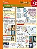 Lerntafel: Zoologie im Überblick (Lerntafeln Biologie) -
