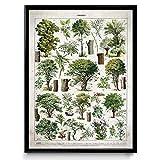 Illustration des Arbres Vintage Print 3 - VP1092UK, Coton, Vintage Beige, 30 x 40 cm
