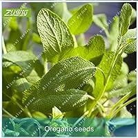 Suchergebnis auf f r evergreen pflanzen svi for Evergreen pflanzen
