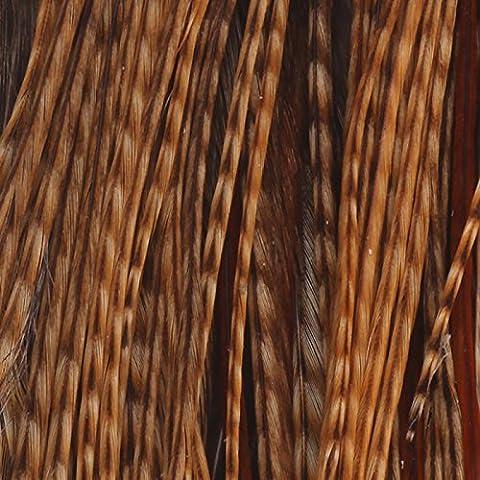 Cape Bronce Merlano, Barred Dark Ginger