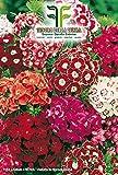 450 aprox - Samen Nelke der Dichter In Mischung - Süße William In Originalverpackung Produziert in Italien - Blumen von Nelken