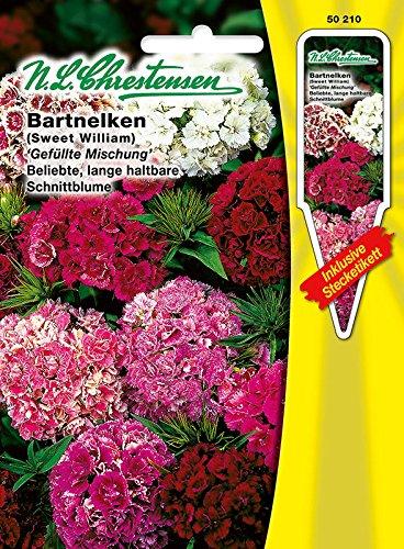 Bartnelken 'Gefüllte Mischung', gefüllt blühend, lange haltbare Schnittblume, zweijährig, Büschelnelken ( mit Stecketiket) 'Dianthus barbatus'