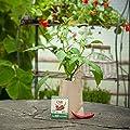 """Minigarten - Chili """"Fireflame"""" - Komplettes Anzuchtset für feurige, rote Chilis von Die Stadtgärtner - Du und dein Garten"""