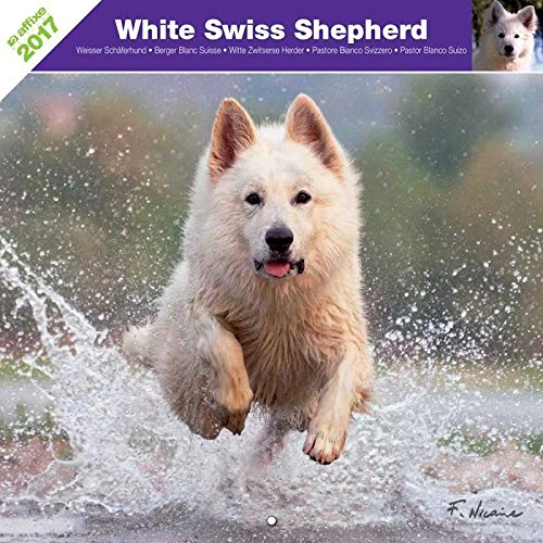 WHITE SWISS SHEPHERD 2017 - CALENDAR AFFIXE
