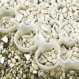 BodPave®85: hochbelastbares Wabengitter, weiß, 20m² zum Paketpreis: 120,00Euro Ersparnis gegenüber Einzelkauf