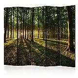 murando - Raumteiler Wald Baum Natur - Foto Paravent 225x172 cm - beidseitig auf Vlies-Leinwand bedruckt - Blickdicht & Textile Haptik - Trennwand - Spanische Wand - Sichtschutz - Raumtrenner - Deko - Design - grün c-B-0027-z-c