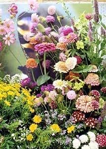 Tropica - prato (14 specie) fiori campo germania meridionale farfalla 1000 semi