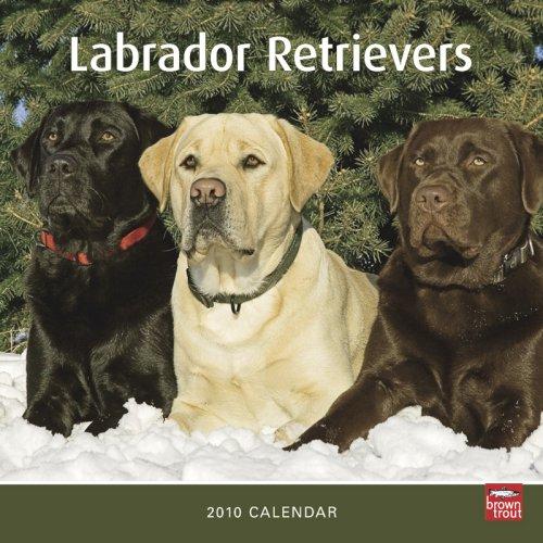 Labrador Retrievers 2010 -