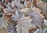Tischsets Platzsets abwaschbar Frostblätter Herbst Winter von ARTIPICS 4er-Set Kunststoff 42x30 cm