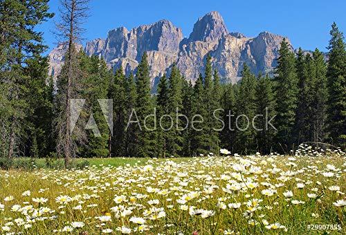druck-shop24 Wunschmotiv: Kanadische Rocky Mountains #29907855 - Bild auf Forex-Platte - 3:2-60 x 40 cm / 40 x 60 cm (Platte Kanadische)