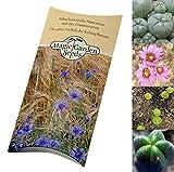 Kakteen-Saatgut Set:Peyote & San Pedro Kaktus je 20 Samen zur Anzucht in schöner Geschenk-Verpackung