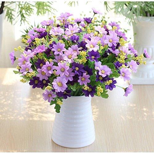 un-crisantemo-crisantemo-daisy-fiore-fiore-fiore-fiore-fiore-chow-jumping-5-fascio-acqua-viola5-viol