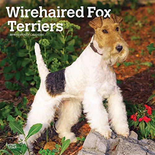 Fox Terriers - Foxterrier 2019 - 18-Monatskalender mit freier DogDays-App: Original BrownTrout-Kalender [Mehrsprachig] [Kalender] por Inc. Browntrout Publishers