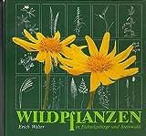 Wildpflanzen in Fichtelgebirge und Steinwald - Erich Walter