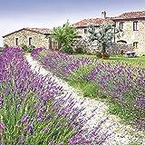 Servietten Napkins 33x33cm 20 Stück Packg. Serviettentechnik Lavendel Feld Toskana violett Lavender Farm