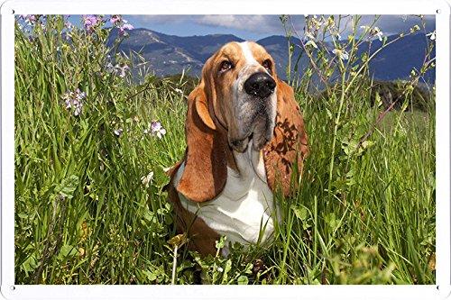 Bassett Plakat (Metall Poster Platte Wand-Dekor Blechschild von Bassett Dog Grass Ears Charming 26915 20*30cm)