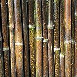 Balcone Protezione Bordo di Recinzione di bambù Schermata Privacy bambù Robusto 3 Cm di Diametro Resistente agli Agenti Atmosferici Copertura di Balconi, Pareti del Giardino, Balconi