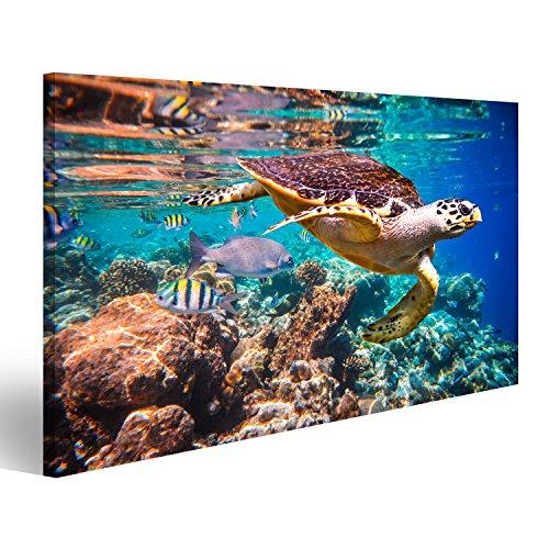 lder auf Leinwand Hawksbill Schildkröte - Eretmochelys imbricata schwimmt unter Wasser. Verschiedene Formate ! Direkt vom Hersteller ! Bilder ! Wandbild Poster Leinwandbilder ! EOG (Schildkröten-bilder)