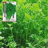 CWAIXX Farmer es vier Jahreszeiten Gartenterrasse im Frühjahr Gemüse Samen säen Gemüsesamen eingemachte Früchte Erdbeere Lauch und Koriander, Koriander