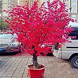 Japanische Sakura Kirschblüten Samen Rosa Rot Bonsai-Baum Blume Home Balkon Dekoration 20 Stück oder 50 Stücke