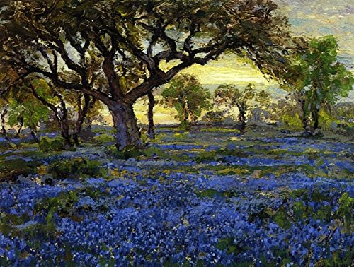 Das Museum Outlet – Old Live Oak Tree und Bluebonnets auf der West Texas Military Kaffeepulver, San Antonio, 1919–20 – Leinwand (61 x 81,3 cm)