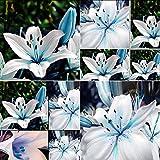 Rosepoem 50 Stücke Blau Seltene Lilienzwiebeln Samen Pflanzen Lilium Blume Hausgarten Decor