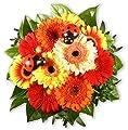 """Blumenstrauß Blumenversand """"Gerbera und Co."""" +Gratis Grußkarte+Wunschtermin+Frischhaltemittel+Geschenkverpackung von Blumen-King.de auf Du und dein Garten"""