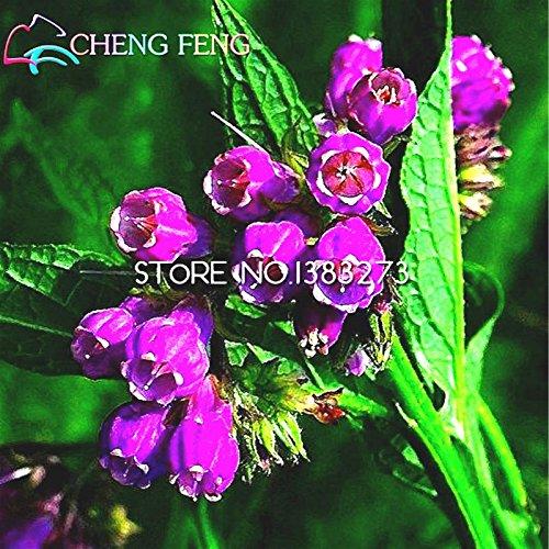 100 Semillas Semillas consuelda nuevos de la flor Hogar y jardín Bonsai Semillas de plantas * Jardín Raras de semillas Perenne Flores Bulbos