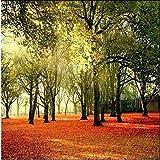 LqwxToile De Fond D'Écran 3D De La Forêt De Feuillus Hd Paysage Soleil Parc Marche Président Contexte Soie Personnalisé Papier Peint Photo-430Cmx300Cm