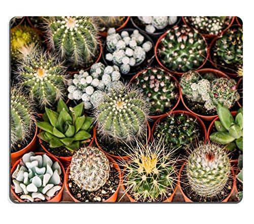 msd-caucho-natural-gaming-mousepad-imagen-id-31151351cactus-planta-de-desierto