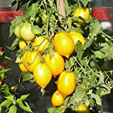 10 Samen Plum Lemon Tomate – dekorative zitronenförmige Früchte