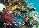 Leben im Roten Meer (Tischkalender 2019 DIN A5 quer): Unterwasserfotos aus dem Roten Meer (Monatskalender, 14 Seiten ) (CALVENDO Natur) -