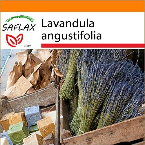 Galleria fotografica SAFLAX - Garden in the Bag - Lavanda - 150 semi - Lavandula angustifolia