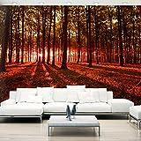 murando - Vlies Fototapete 400x280 cm - Vlies Tapete - Moderne Wanddeko - Design Tapete - Wald Natur Landschaft Bäume c-B-0127-a-d
